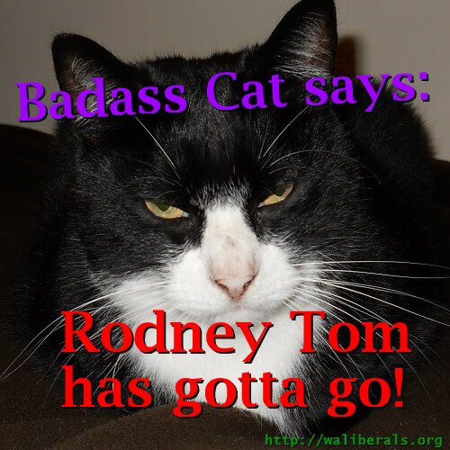 Badass Cat says Rodney Tom has gotta go
